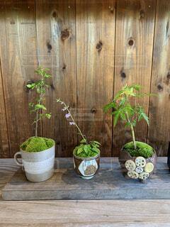 カフェ,花,植物,植木,観葉植物,箱根,ポット,ガーデン,足湯カフェ