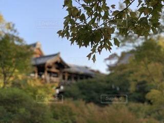 自然,風景,空,建物,秋,屋外,京都,景色,観光,草,樹木,旅行,寺院,寺,歴史,建築,観光名所,東福寺,日本文化