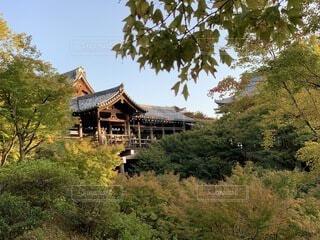 自然,風景,空,建物,秋,森林,屋外,京都,散歩,景色,観光,樹木,旅行,寺院,寺,歴史,建築,観光名所,東福寺,日本文化