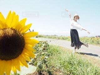 花,夏,屋外,ひまわり,帽子,暑い,黄色,バレリーナ,庭園,麦わら帽子,思い出,草木