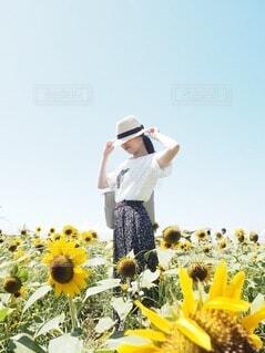 空,花,夏,屋外,ひまわり,帽子,暑い,黄色,庭園,麦わら帽子,思い出,草木