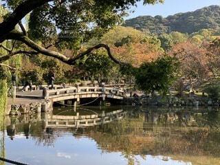水の体の隣にある木の写真・画像素材[4936700]