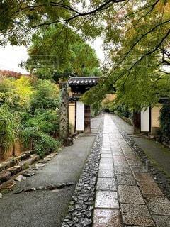秋,雨,屋外,京都,散歩,観光,樹木,道,旅行,歩道,石,寺院,通り,草木