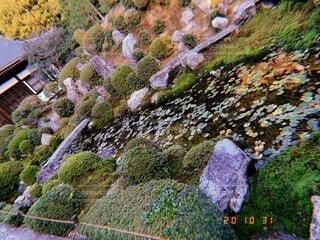自然,風景,花,秋,屋外,京都,神社,散歩,葉,池,景色,観光,庭園,旅行,寺院,歴史,観光名所,日本文化,ガーデン