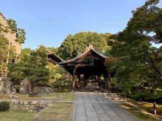 自然,風景,空,秋,屋外,京都,神社,散歩,景色,観光,草,樹木,旅行,寺院,寺,歴史,建築,草木,観光名所,日本文化