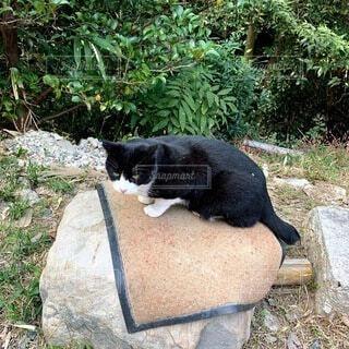 猫,秋,動物,屋外,京都,黒,景色,草,樹木,地面,黒猫,草木,ネコ科