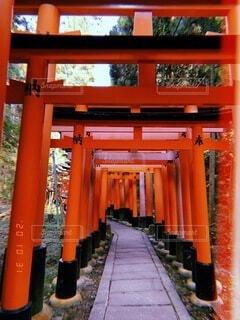 秋,京都,神社,赤,散歩,鳥居,オレンジ,観光,旅行,門,伏見稲荷大社,伏見稲荷,歴史,建築,観光名所,日本文化