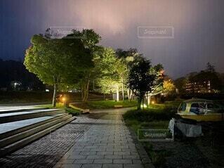 道路の脇に木がある道の写真・画像素材[4948309]