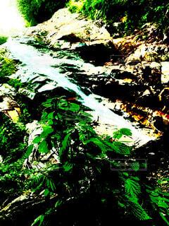 自然,夏,森林,屋外,緑,葉,景色,滝,樹木,絵画,草木,清涼,瀧