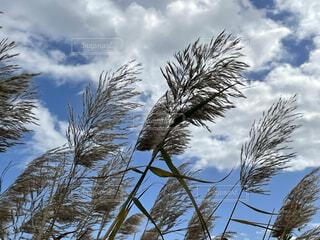 自然,空,屋外,雲,樹木,草木,針葉樹