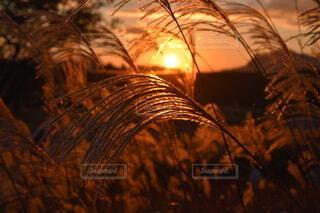 自然,空,秋,夕日,屋外,太陽,綺麗,夕焼け,夕方,山,オレンジ,ススキ,景観,秋冬,すすき