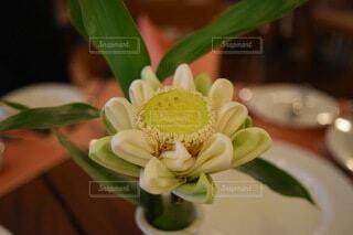 花,海外,綺麗,花びら,お花,芸術,ハンドメイド,手作り,フローラ