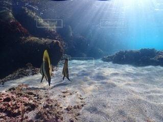 自然,海,魚,屋外,水族館,水面,葉,山,泳ぐ,ダイビング,コーラル,スキューバ ダイビング,シュノーケ リング
