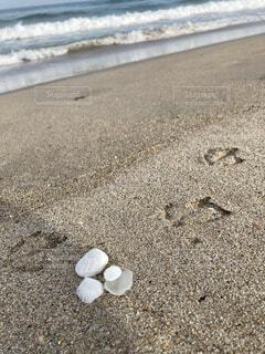 海,ビーチ,砂浜,貝殻,海岸,うみ,ビーチコーミング,ウミネコ,シーグラス,鳥の足跡
