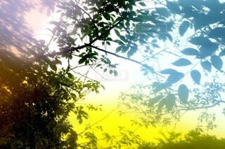 自然,空,森林,木,屋外,緑,枝,幻想的,葉,樹木,エモい