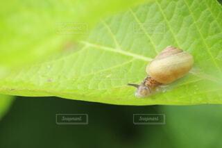雨,緑,葉,虫,貝,梅雨,6月,カタツムリ,触覚
