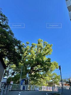 空,花,屋外,雲,樹木