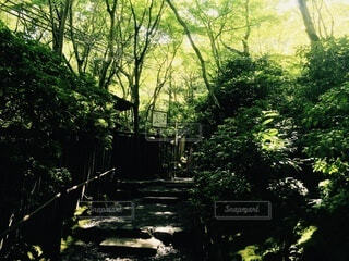 自然,公園,屋外,樹木,草木