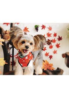 犬,動物,屋内,白