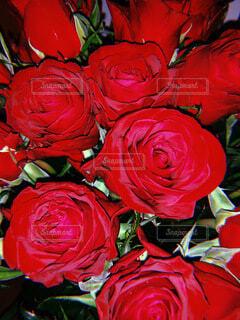 花,赤,花束,バラ,薔薇,バレンタイン,草木,フロリバンダ,ハイブリッドティーローズ