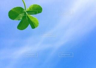 空,屋外,クローバー,四つ葉,ソラ,幸運