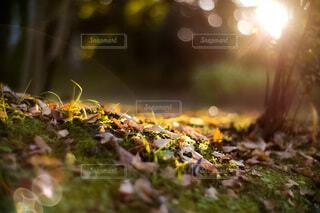 自然,公園,秋,植物,葉,日光,夕方,山,木漏れ日,落ち葉,夕陽,日当たり