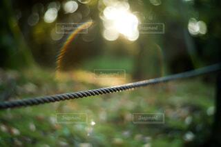 自然,公園,夕方,山,木漏れ日,光,ぼかし,逆光,明かり,夕陽,ロープ,日当たり