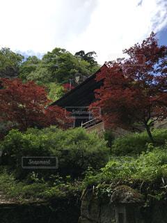 空,花,秋,屋外,家,樹木,カエデ