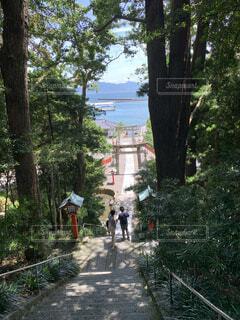 海,夏,屋外,神社,階段,晴れ,鳥居,水面,景色,木漏れ日,樹木,日本,福岡,離島,エモい