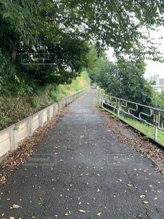 雨,屋外,散歩,小道,落ち葉,樹木,歩道,地面,アスファルト,草木