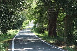 自然,木,森,散歩,道,ドライブ,秘境,細道