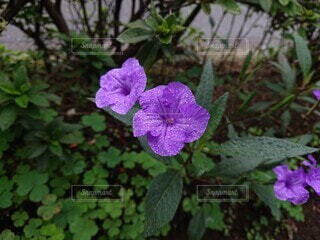 花,木,雨,屋外,紫,葉,雫