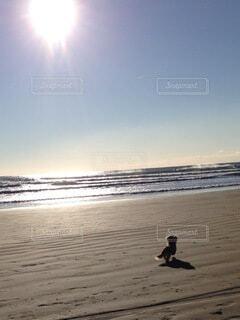 犬,自然,海,空,屋外,朝日,砂,ビーチ,水面,海岸,早朝,ワンコ