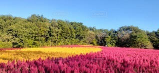 空,公園,花,秋,屋外,草,樹木,散歩日和