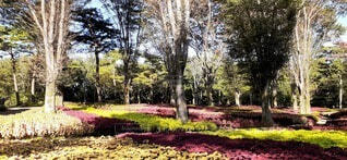 公園,花,秋,屋外,草,樹木,草木,ガーデン