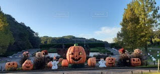 空,秋,屋外,野菜,樹木,イベント,かぼちゃ,ライフスタイル,スカッシュ,ハロウィーン,行事,カボチャ