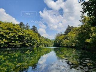自然,風景,空,秋,屋外,雲,水面,池,鏡,樹木,草木