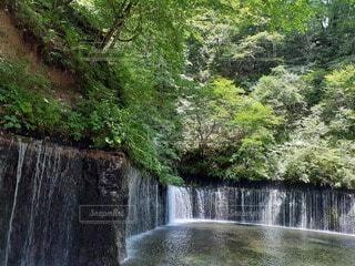 森の中の滝の写真・画像素材[4922245]