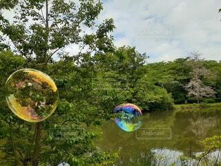 公園,屋外,水面,樹木,草木,バブル,オブジェクト,ガーデン