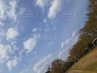 空,屋外,雲,シャボン玉,樹木