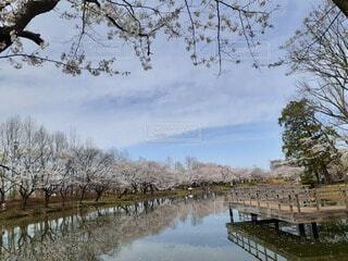 自然,風景,空,屋外,湖,水面,池,草,樹木