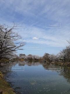 自然,空,桜,屋外,湖,雲,水面,花びら,樹木