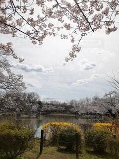 自然,空,秋,屋外,水面,樹木