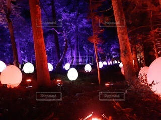 夜,屋外,ライト,樹木,卵,明るい
