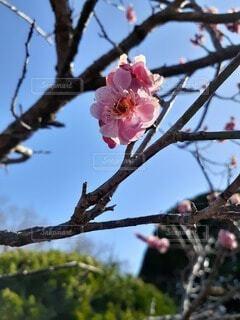 空,花,春,屋外,樹木