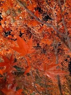 空,花,紅葉,屋外,オレンジ,草,樹木,草木