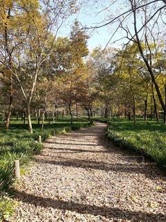 屋外,葉,樹木