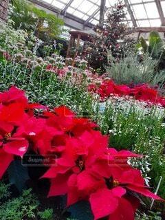 花,屋外,赤,樹木,草木,フローラ