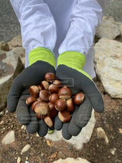 秋,栗,たくさん,収穫,旬,味覚