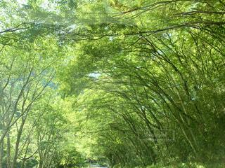 新緑のアーチの写真・画像素材[4959224]